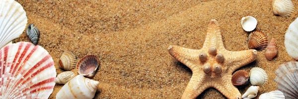 Summer Scheduling Blog